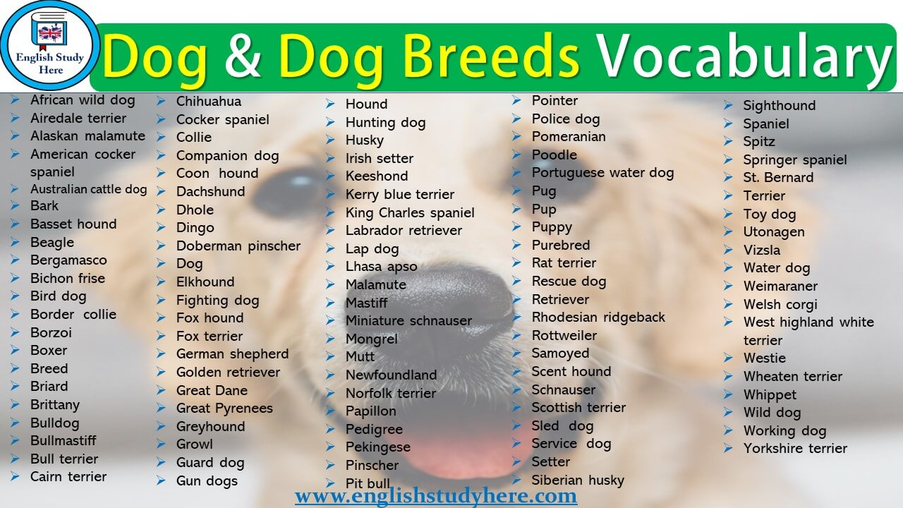 Dog and Dog Breeds Vocabulary