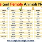 Male and Female Animals Name List