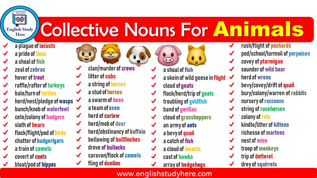 Collective Nouns For Animals