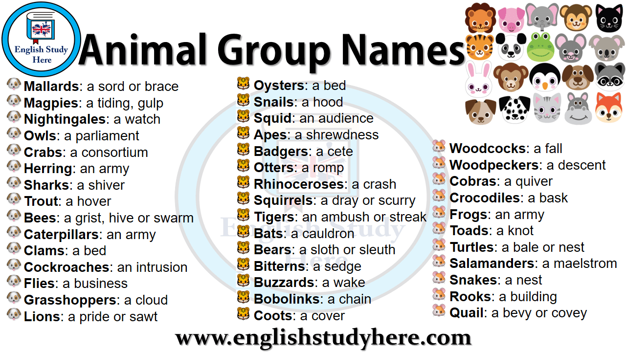 Animal Group Names