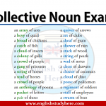 Collective Noun Examples