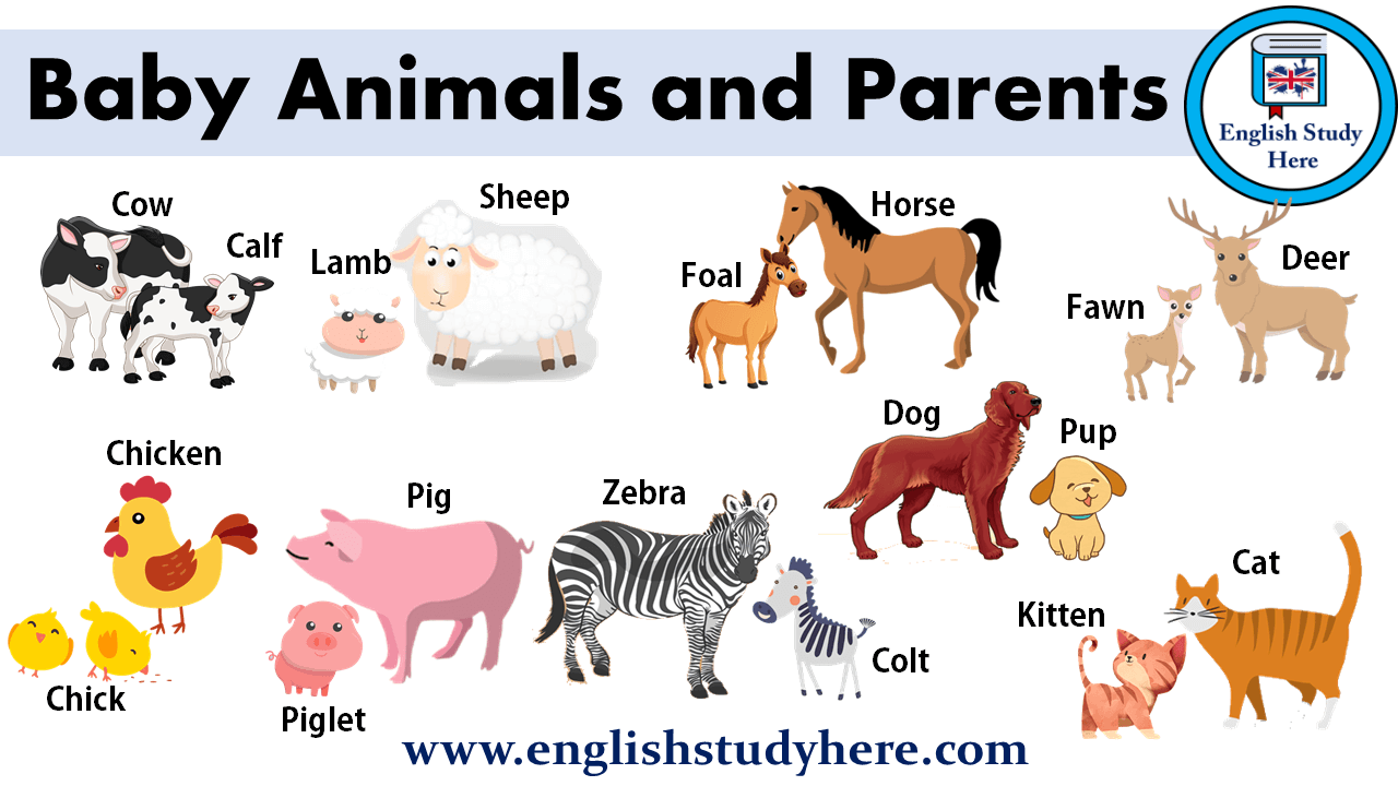 Baby Animals and Parents Names