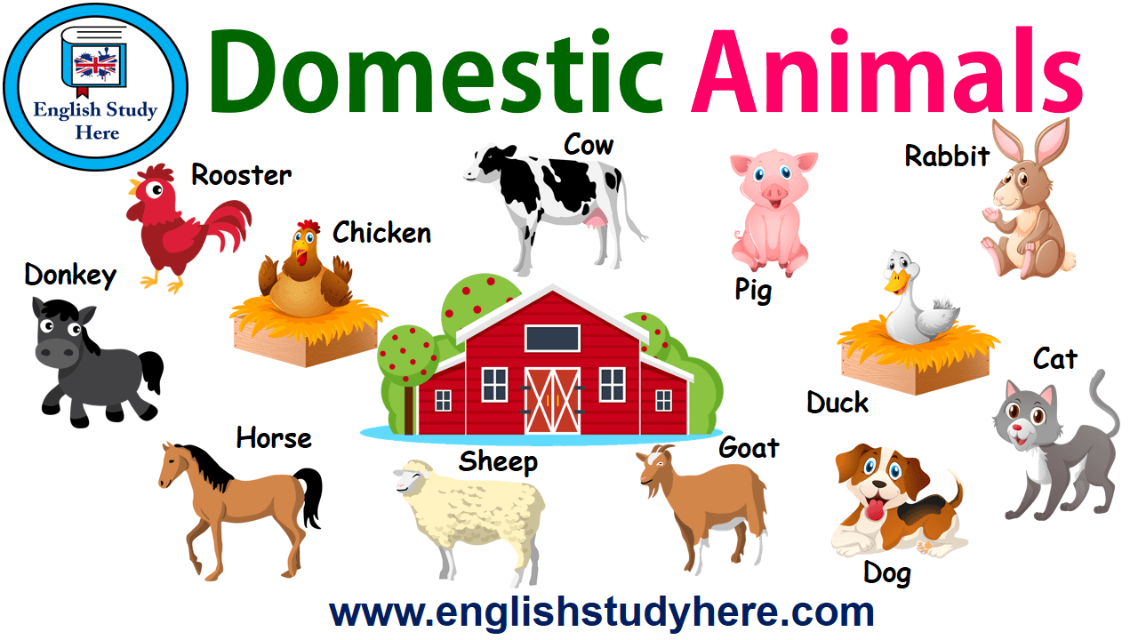 Domestic Animals Names
