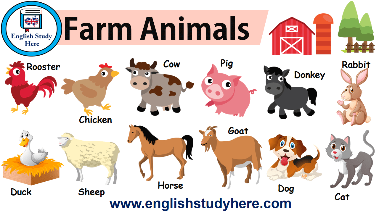 Farm Animals in English - English Study Here