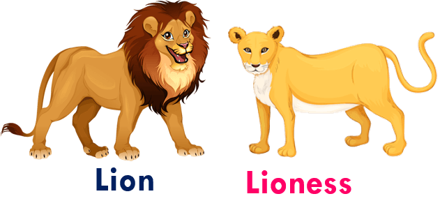 Gender of animals Lion - Lioness
