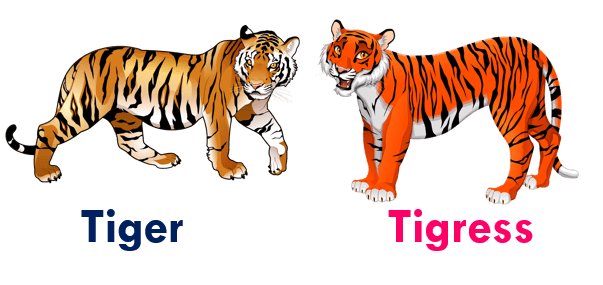 Gender of animals Tiger- Tigress