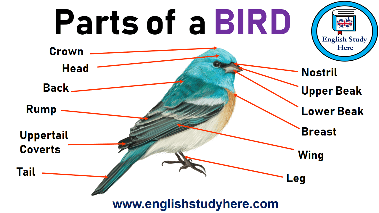 Parts of a BIRD Vocabulary