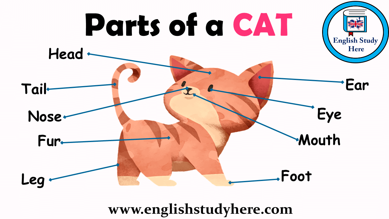 Parts of a Cat Vocabulary