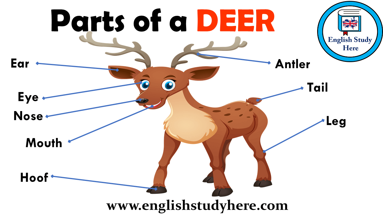 Parts of a DEER Vocabulary