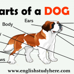 Parts of a DOG Names