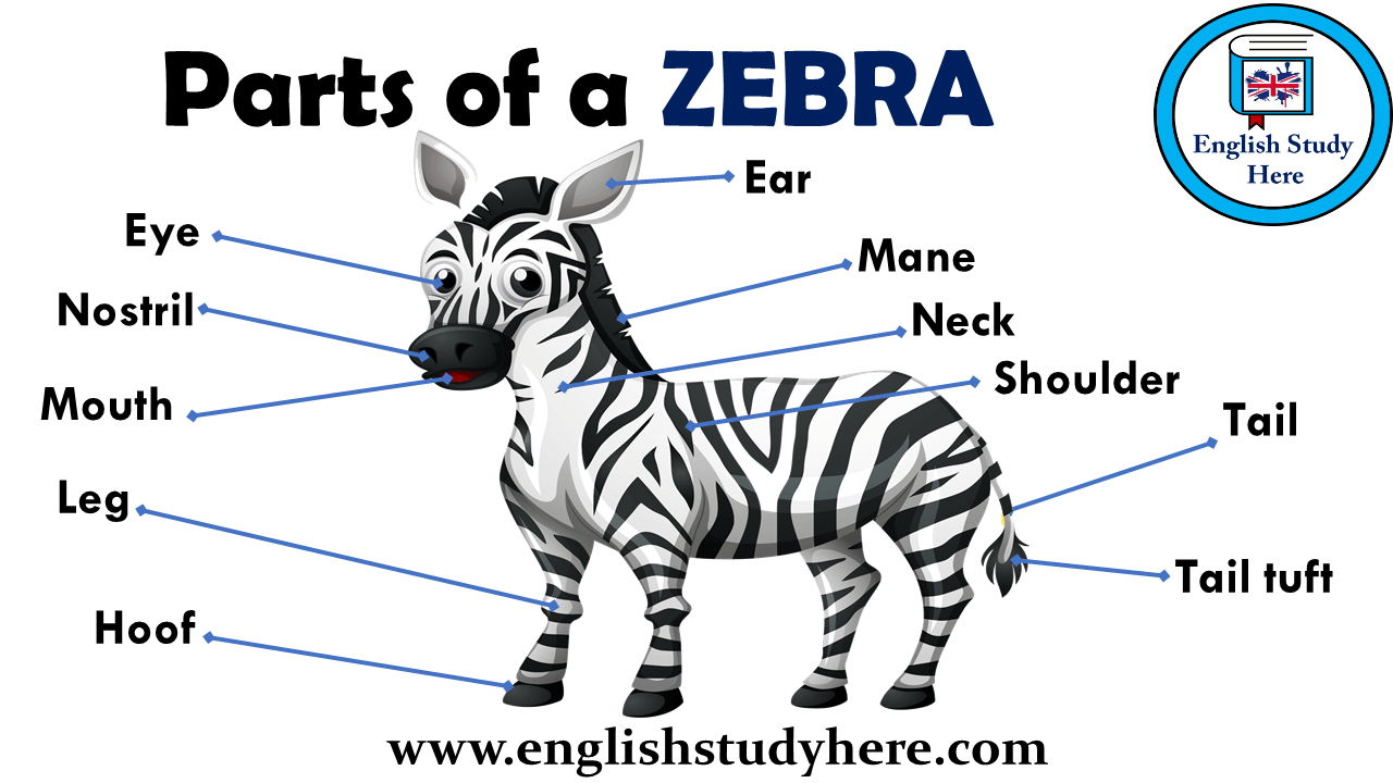 Parts of a ZEBRA Vocabulary