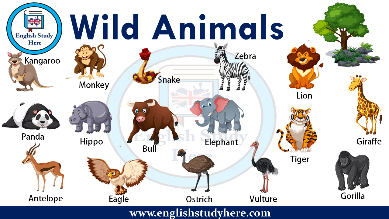 Wild Animals Names English Study Here