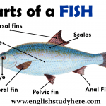 Parts of a Fish Vocabulary
