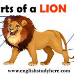 Parts of a LION Vocabulary
