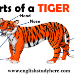 Parts of a TIGER Vocabulary