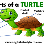 Parts of a TURTLE Vocabulary